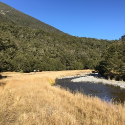 Trapping in the Andrews Valley